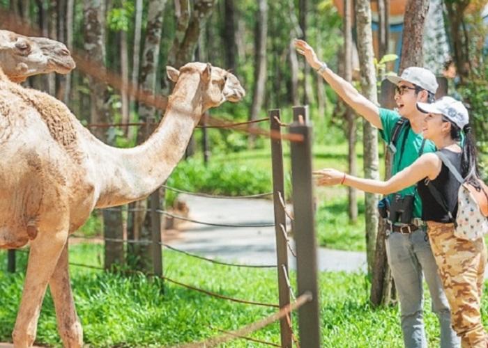 Mường Thanh Safari Nghệ An