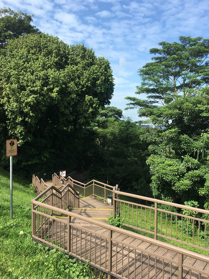 Where you can see many birds - Mount Faber Park Singapore