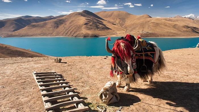 Hồ Yamdrok - Hướng dẫn du lịch Lhasa