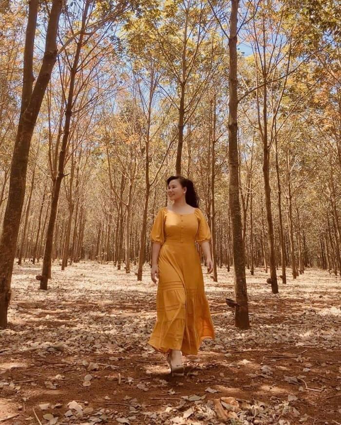 mùa thay lá - thời điểm nên ghé thăm rừng cao su ở Đắk Lắk