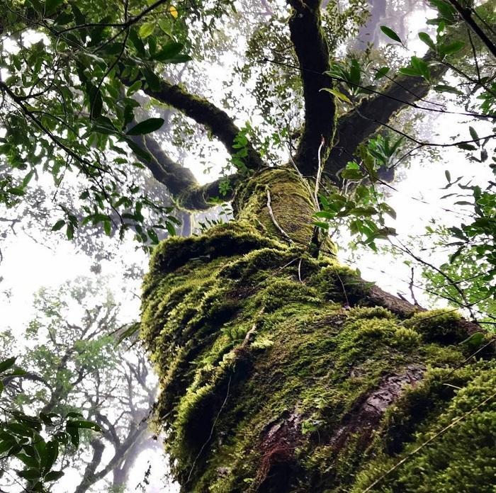 Những thân cây lớn trong rừng nguyên sinh - Chinh phục Nam Kang Ho Tao