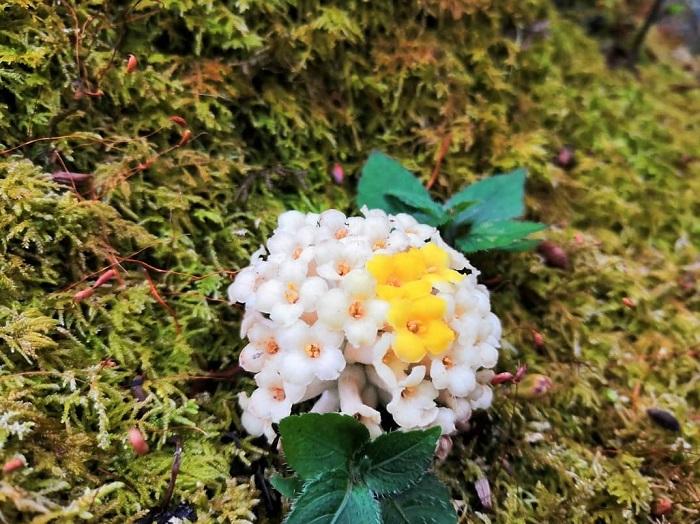 Nên trekking vào mùa xuân hoặc thu - Chinh phục Nam Kang Ho Tao