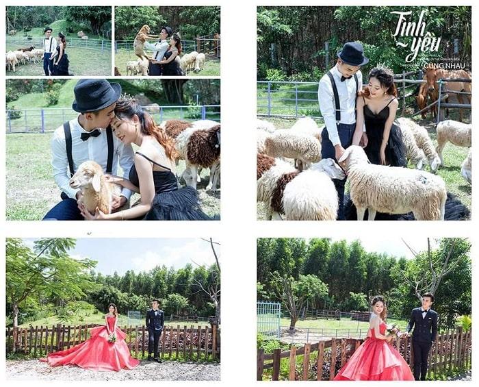 Wedding photography - interesting activities at Bung Rieng sheep hill in Vung Tau