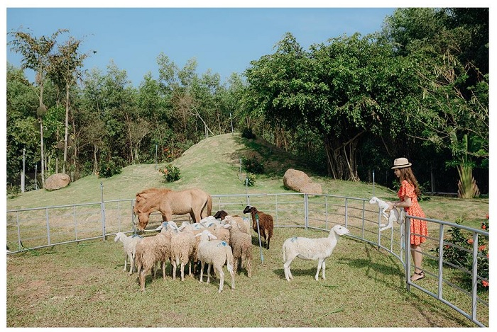 as beautiful as Switzerland - the attraction of Bung Rieng sheep hill in Vung Tau