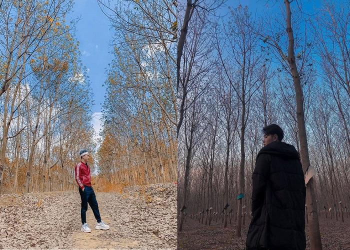 Có một rừng cao su ở Đắk Lắk đẹp tựa Bắc Âu, bạn đã đến chưa?