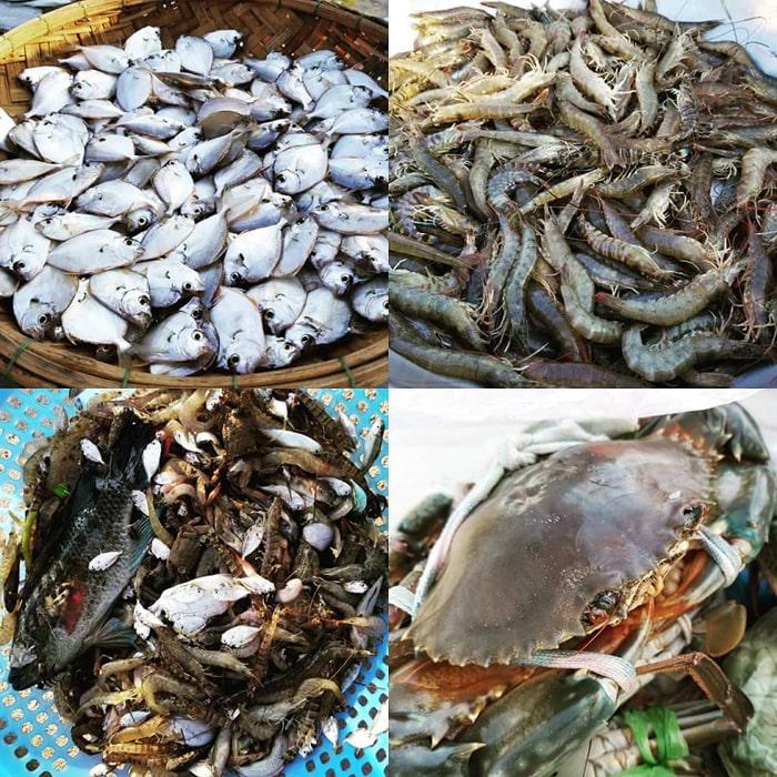 Khám phá đầm Chuồn Huế - Đầm có nhiều món ăn hải sản