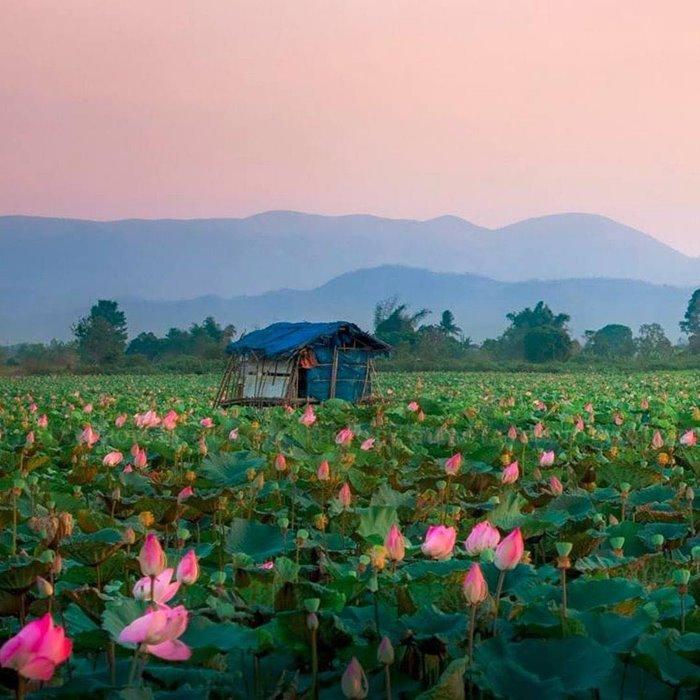 đầm sen an khê điểm du lịch mới ở Gia Lai