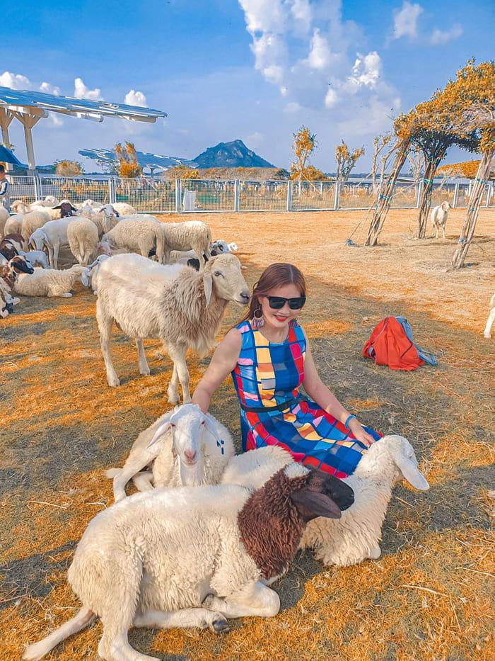 Check in khu du lịch điện mặt trời An Hảo - Đồng cừu
