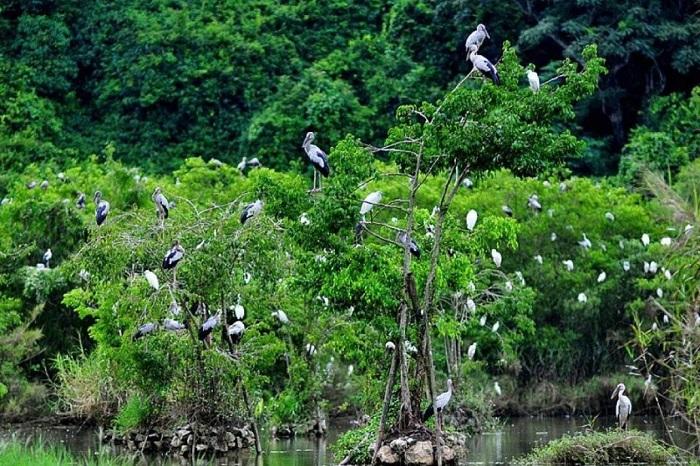 Bac Huong Hoa Nature Reserve - nature