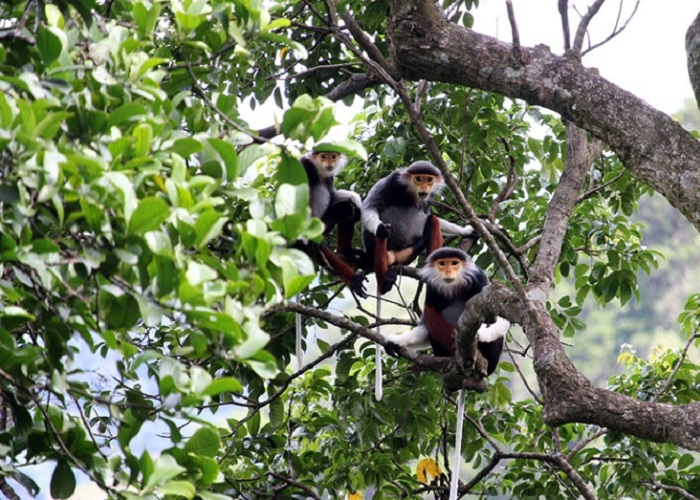 Bac Huong Hoa Nature Reserve - fauna