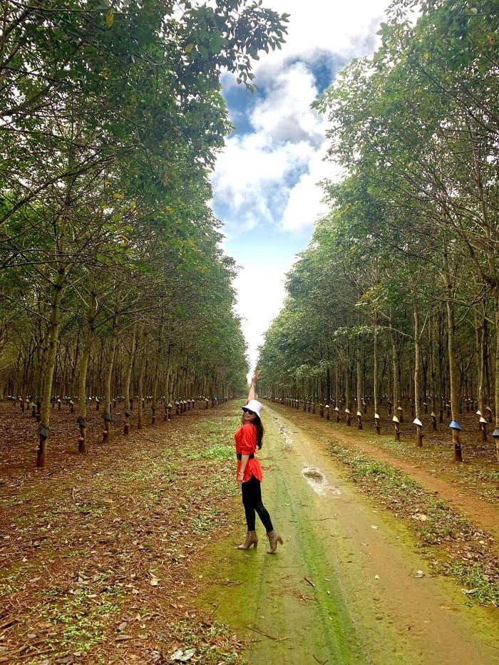 Có một rừng cao su ở Đắk Lắk đẹp tựa Bắc Âu