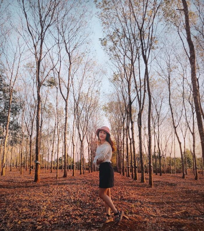 hoàng hôn - thời điểm nến chụp với rừng cao su ở Đắk Lắk