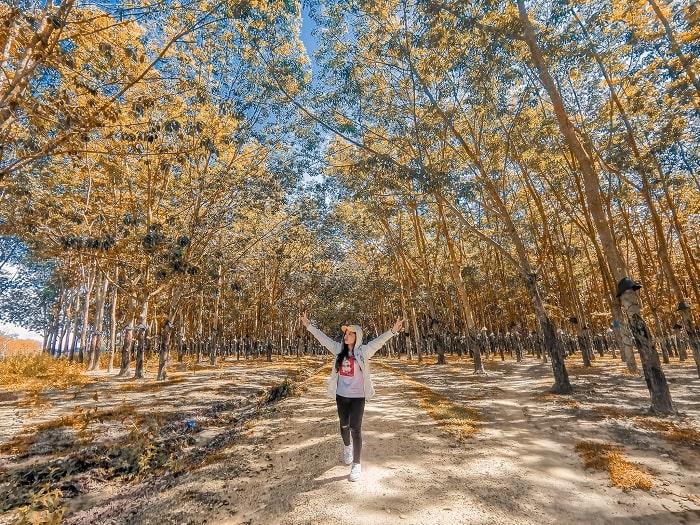 sống ảo - hoạt động không thể bỏ qua tại rừng cao su ở Đắk Lắk
