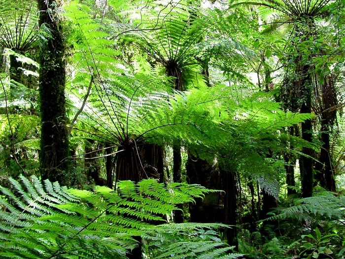 Rừng nguyên sinh Rú Lịnh - cảnh thiên nhiên