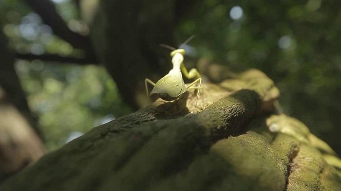 Rừng nguyên sinh Rú Lịnh - tìm hiểu hệ sinh thái