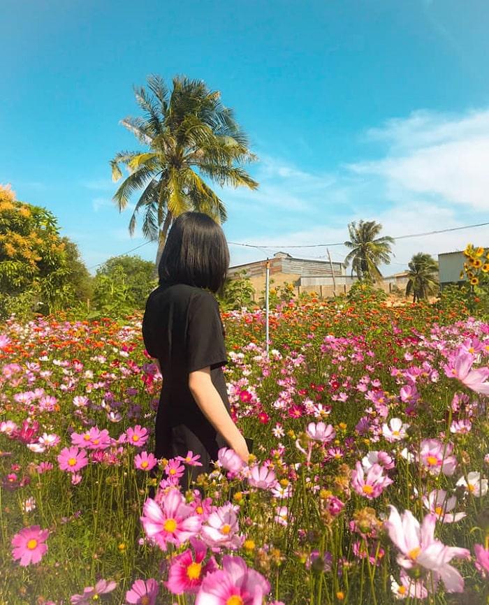 hoa cánh bướm - loài hoa đẹp trong Vườn Hoa Mặt Trời ở Bình Thuận