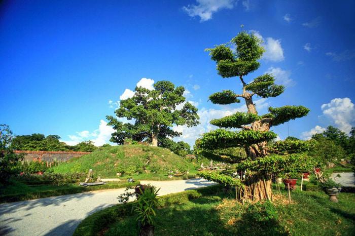 Explore Co Ha garden - rare ornamental plants