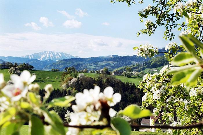 Kinh nghiệm du lịch nước Áo tự túc chi tiết nhất từ A - Z