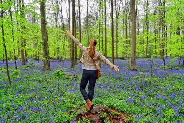 Khám phá khu rừng Hallerbos đẹp như trong chuyện cổ tích chỉ cách Brussels 30 km