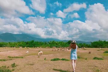 Ninh Thuận 'độ bùa yêu' cánh đồng cừu đẹp quên lối về