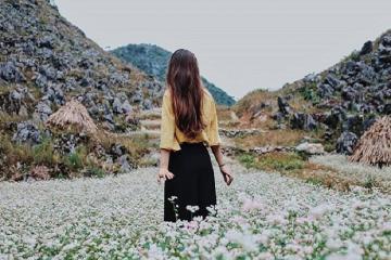 Trải nghiệm 4 mùa hoa trên cao nguyên đá Hà Giang