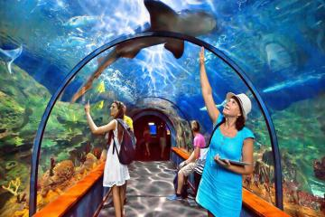 Những điều cần biết khi tham quan thủy cung Sea Aquarium Singapore