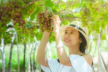 Mục sở thị 3 lễ hội siêu nổi tiếng của tỉnh Ninh Thuận