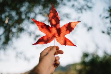 Những nét đặc biệt trong văn hóa Canada du khách nên nắm được