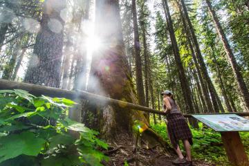 Đẹp ngoạn mục thiên nhiên vùng British Columbia Canada