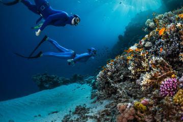 Bí kíp bảo vệ rạn san hô khi đi lặn biển khách du lịch cần biết