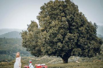 Truy ngay tọa độ cây cô đơn mập ú nức tiếng ở Đà Lạt