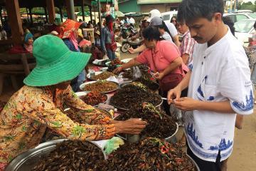 Chợ côn trùng Campuchia - thiên đường ẩm thực siêu độc đáo 'xứ sở chùa Tháp'