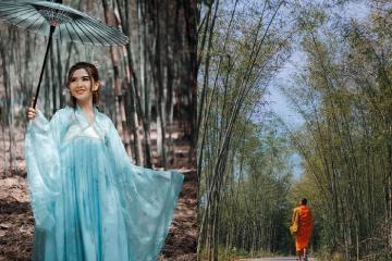 'Sống ảo' với con đường tầm vông Ô Tà Sóc đẹp tựa tranh ở An Giang