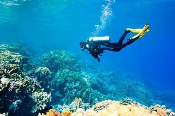 'Checklist' các địa điểm lặn biển ở Campuchia cảnh đẹp tựa thiên đường