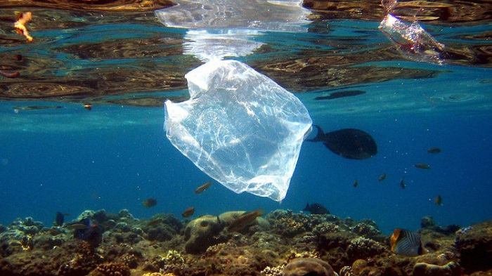 how to protect the marine environment while traveling