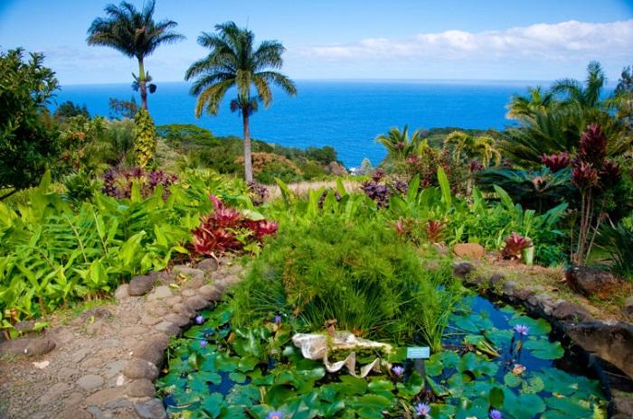Vườn địa đàng - Hướng dẫn du lịch đảo Maui