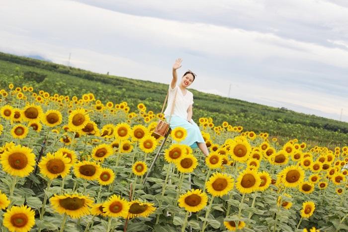cánh đồng hoa hướng dương ở Gio Linh - sống ảo