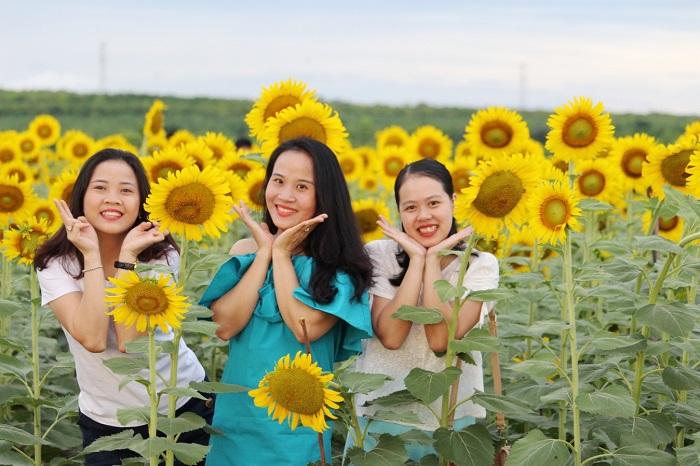 cánh đồng hoa hướng dương ở Gio Linh - địa điểm sống ảo