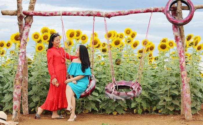 cánh đồng hoa hướng dương ở Gio Linh - chụp hình