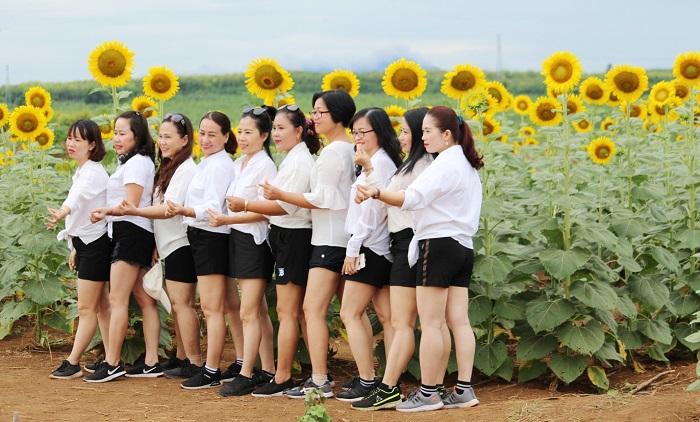 cancánh đồng hoa hướng dương ở Gio Linh - địa điểm chụp hình nổi tiếng