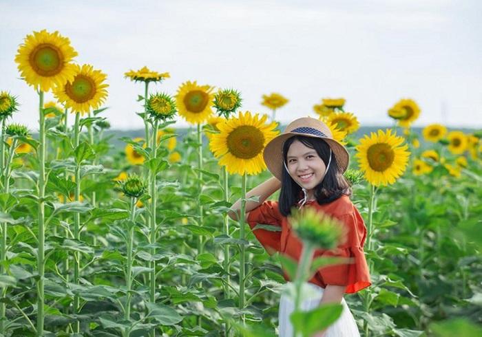 Cánh đồng hoa hướng dương ở Gio Linh - ở đâu