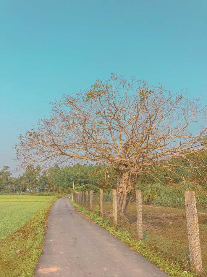 Tien Phuoc tourist destination - Lonely tree