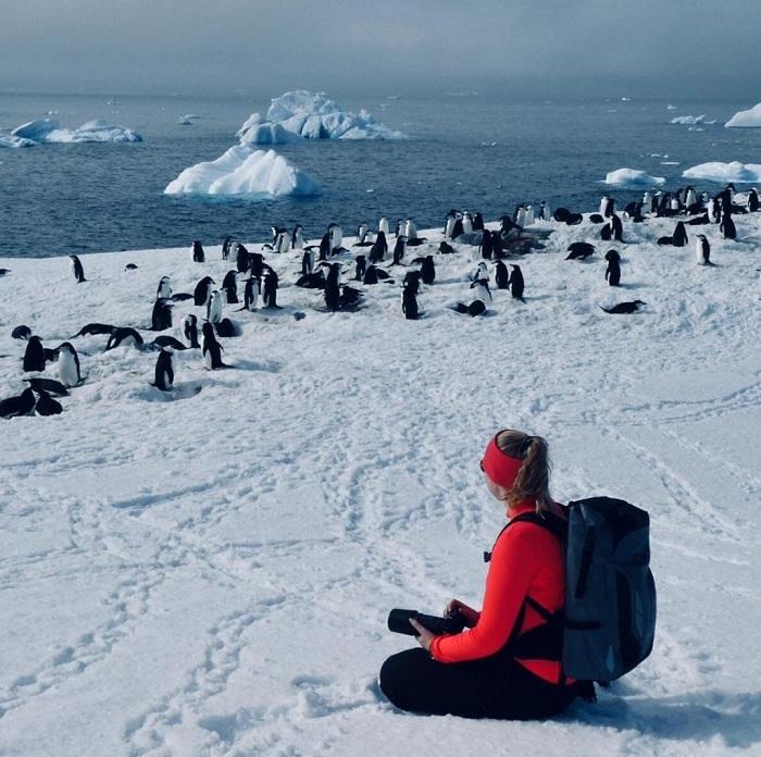 Những đàn chim cánh cụt sống trong cái lạnh của Nam Cực - Du thuyền Nam Cực