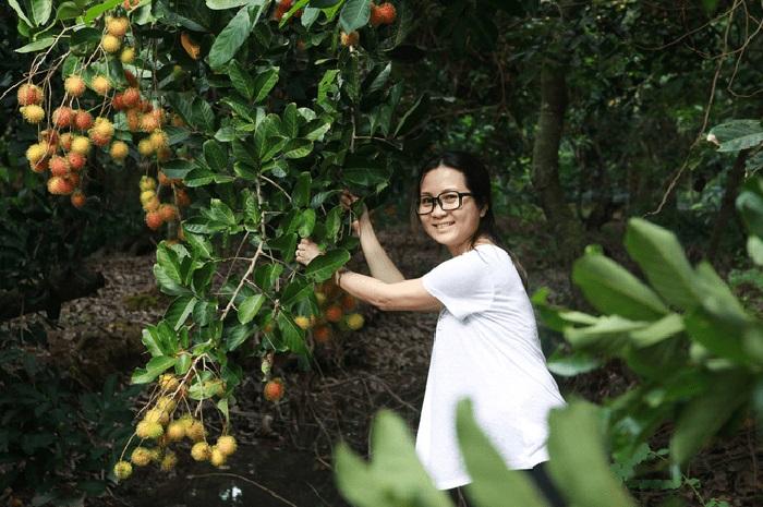 Explore the countryside tourist area Que Ta - Pick rambutan