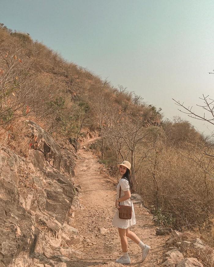dry tree road - beautiful road in Vung Tau feels like Korea