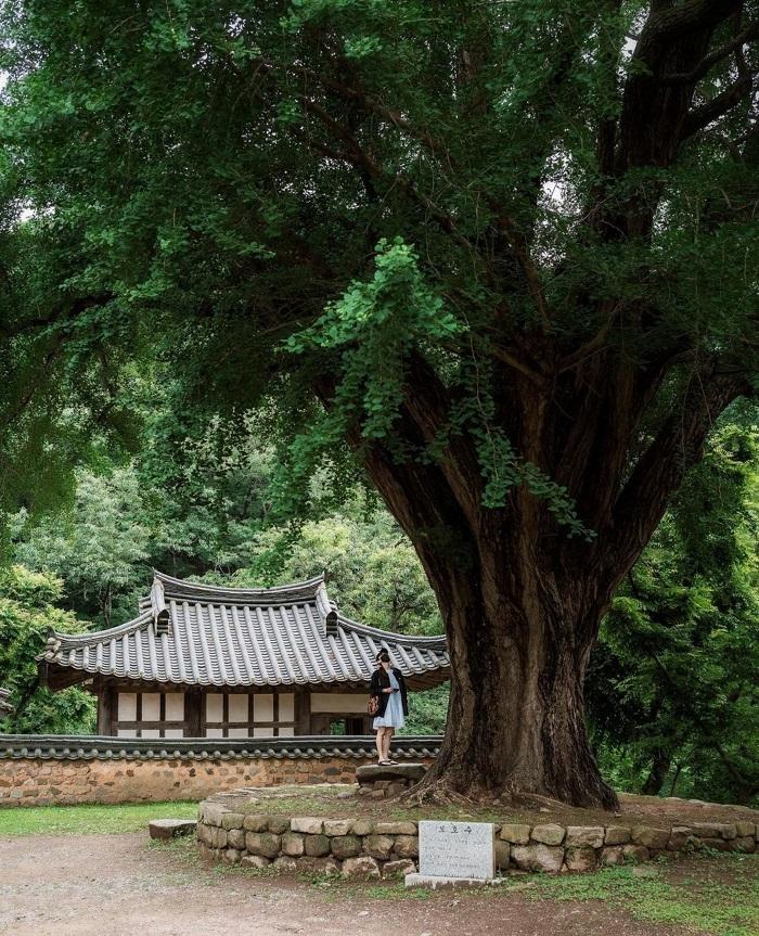 Vẻ đẹp cổ kính của Gyeongju - Kinh nghiệm du lịch Gyeongju