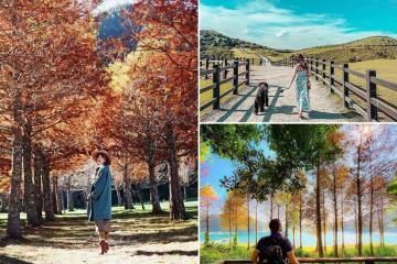 Mê mẩn những điểm đến mùa thu ở Đài Loan đẹp tựa cổ tích