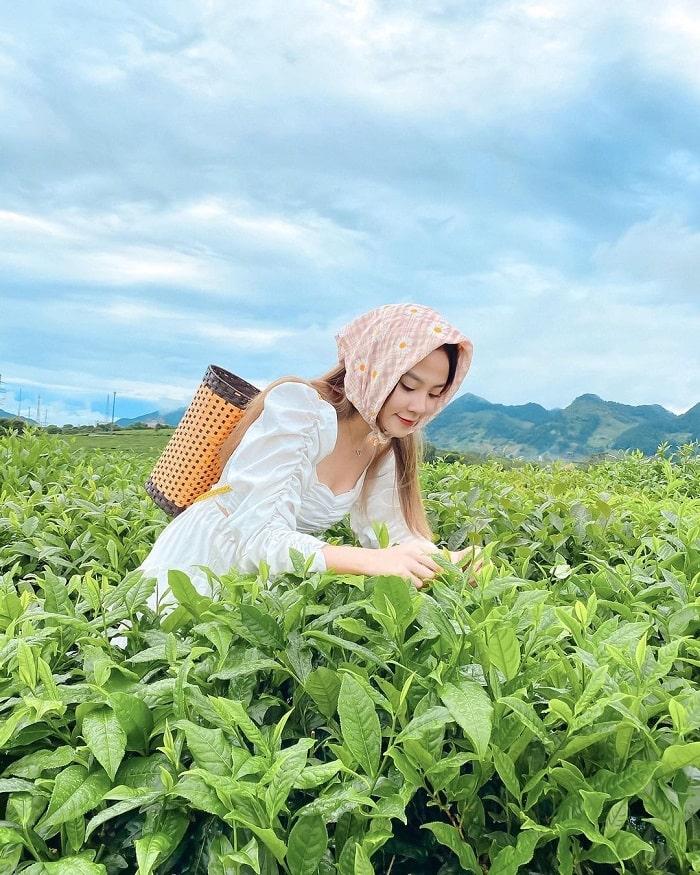 Du lịch Mộc Châu tháng 7 - trải nghiệm hái chè