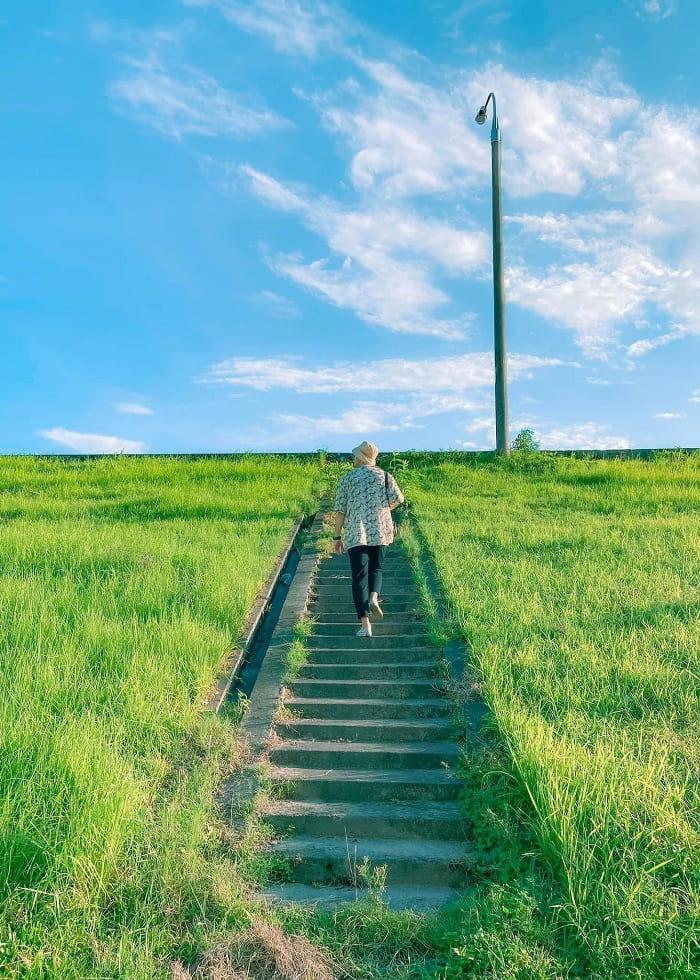 The poetic beauty of Ngoc Thuy reed dyke