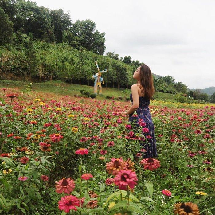 Fairy garden in Yang Bay Park